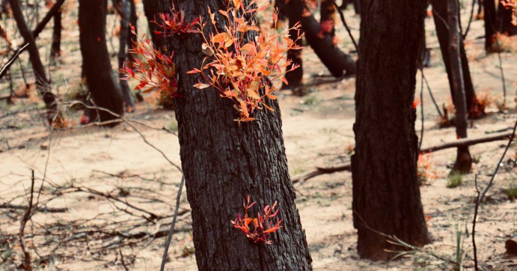 bushfire help psychology